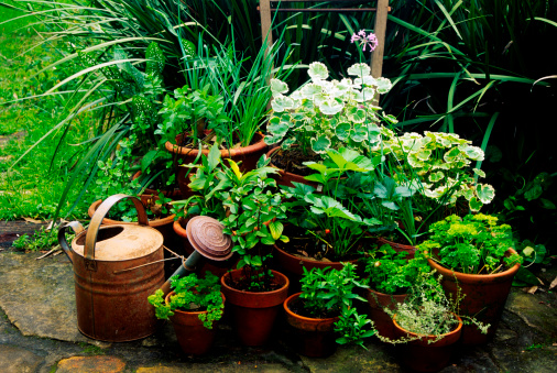 Mixed herb containers and tin watering can